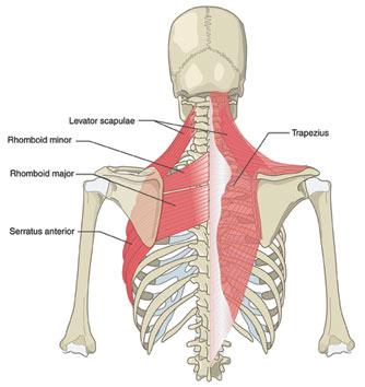 Если болит грудь и спина что это значит