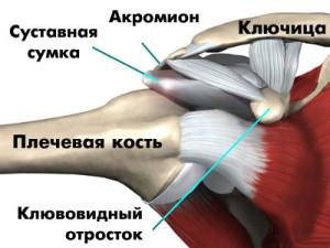Хрустит сустав в плече что делать санатории татарии цены на 2015 год с лечением суставов