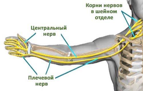идея болит плечевая кость правой руки выше