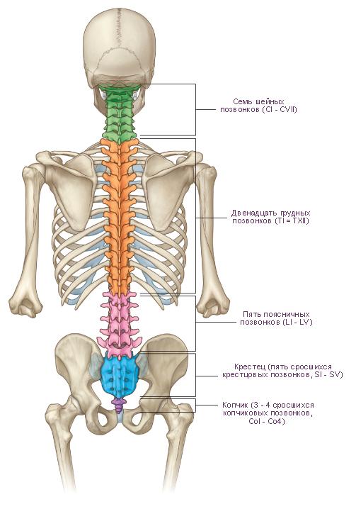Боль под грудью отдающая в правый бок спины