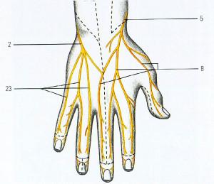 Немеют кончики пальцев левой руки причина