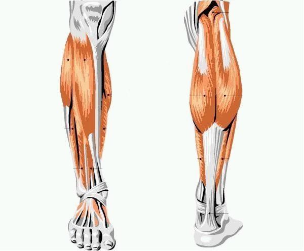 Немеет нога от колена до стопы