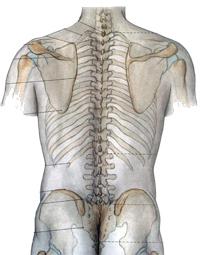 Лечение остеохондроза позвоночника - отзывы форум обсуждение