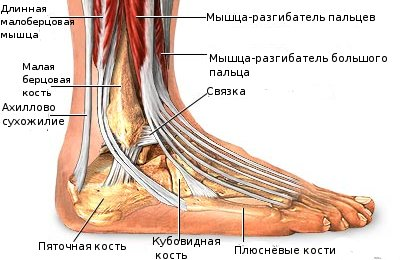 Болит под пальцами ног